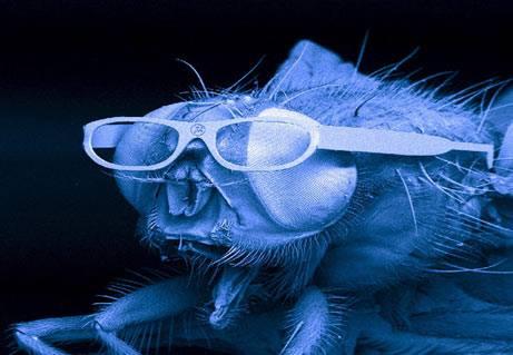 drosophila-coworker-quintadelsordo